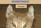 Александр Булахов «Приют для животных»