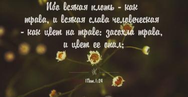 Цитаты из Библии в картинках